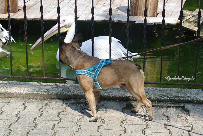 Zoobesuch mit Hund