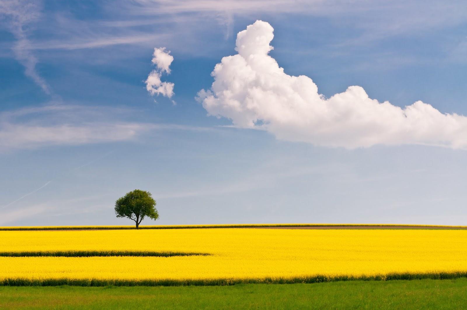 Memaksimalkan Komposisi Foto Landscape horison rata