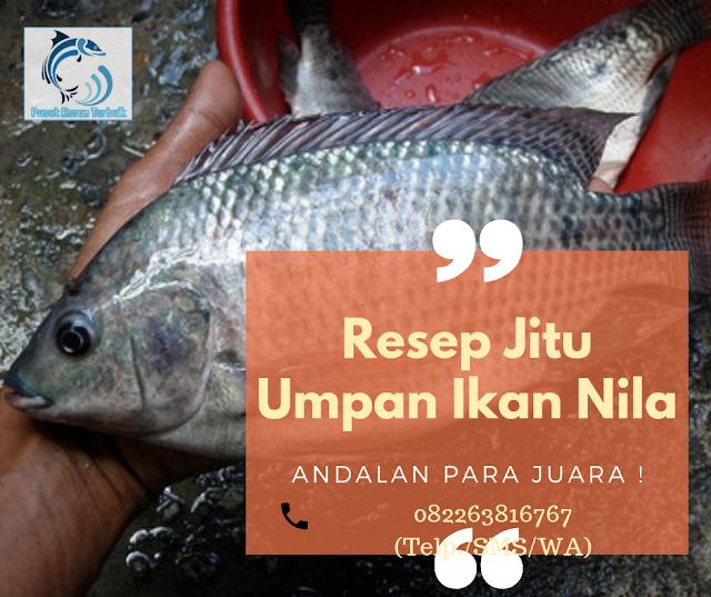 https://pusatessenterbaik.blogspot.com/2019/06/3-resep-jitu-umpan-ikan-nila-dijamin-neter-terus.html