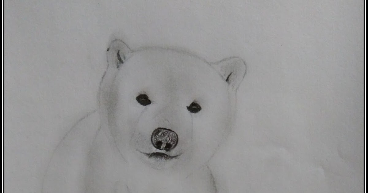 Polar bear drawing for kids