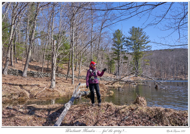 Wachusett Meadow: ... feel the spring?...