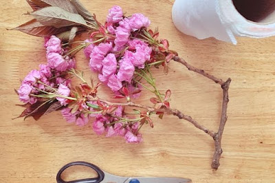 a stalk of cherry blosson flatlay on a table with scissors and kitchen paper