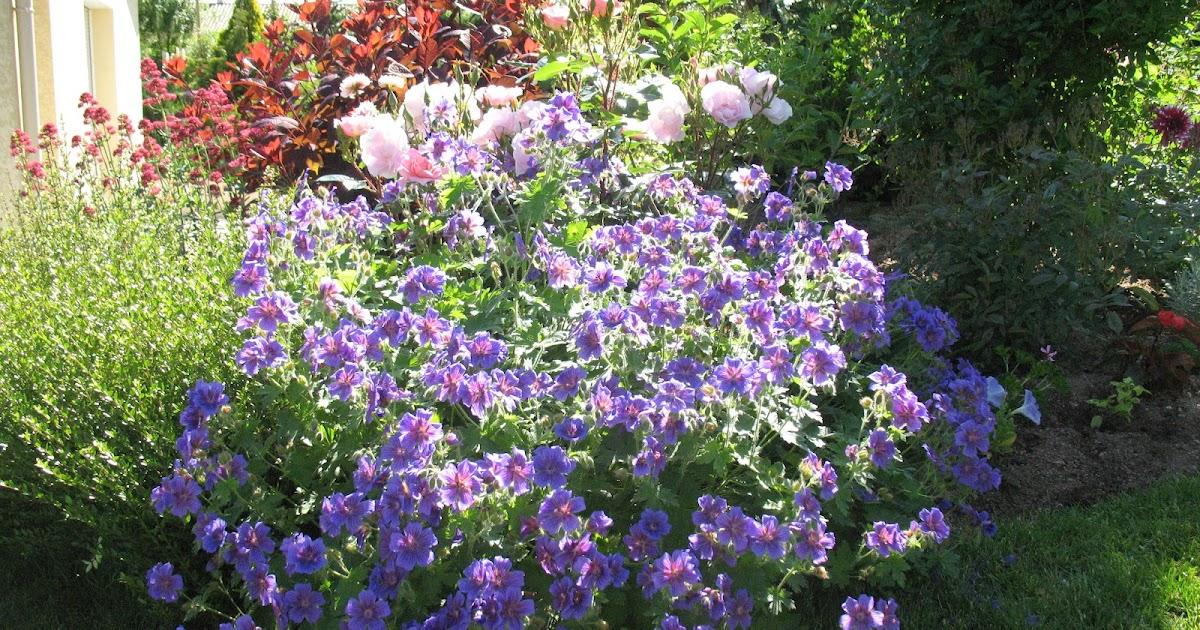 scenery spring pictures fleurs bleues de printemps vivaces. Black Bedroom Furniture Sets. Home Design Ideas