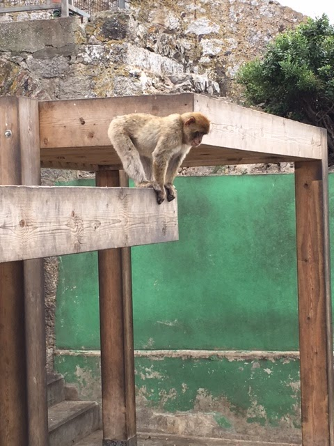 Rock of Gibraltar tour monkeys
