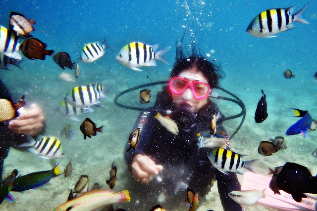 JustMom-Scuba-Diving-Scuba-Diving-Experince-Fish-Feeding-Meachel