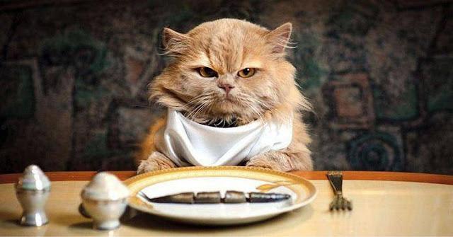 Pemilihan Makanan Kucing