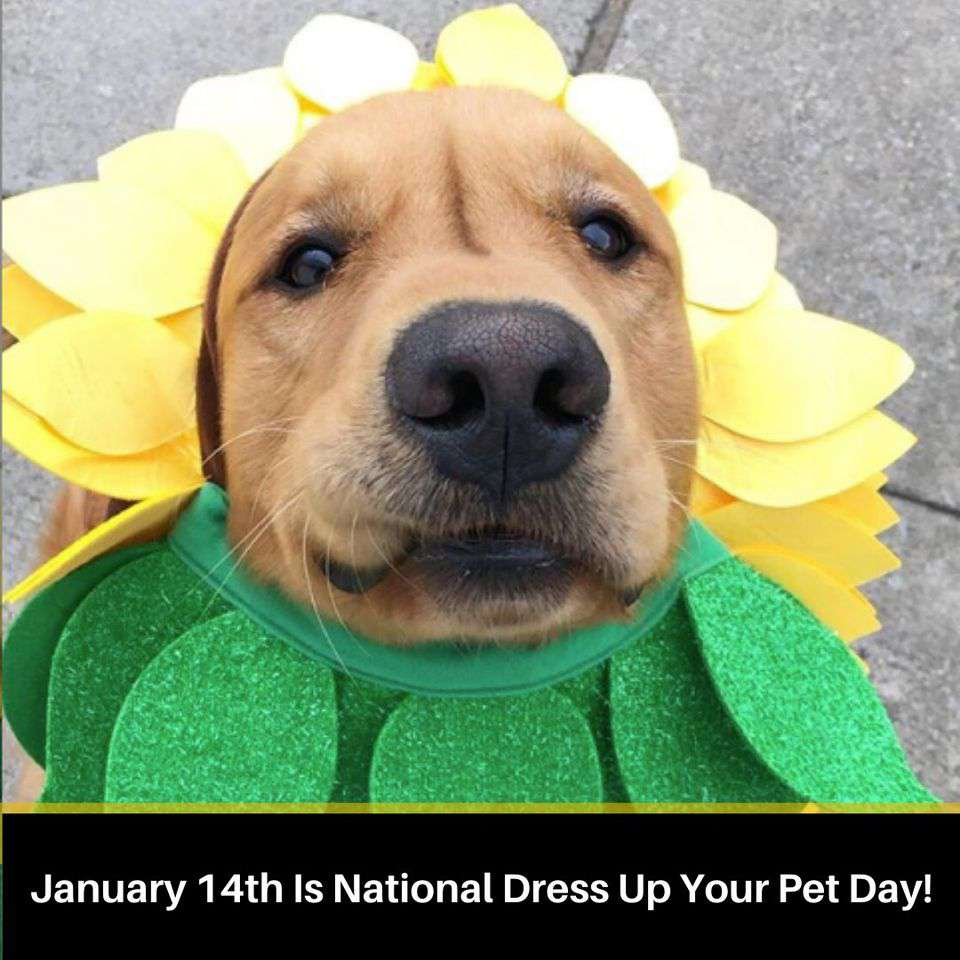 National Dress Up Your Pet Day Wishes Awesome Images, Pictures, Photos, Wallpapers