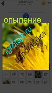 пчела на цветке занимается опылением ответ на 26 уровень 400 плюс слов 2
