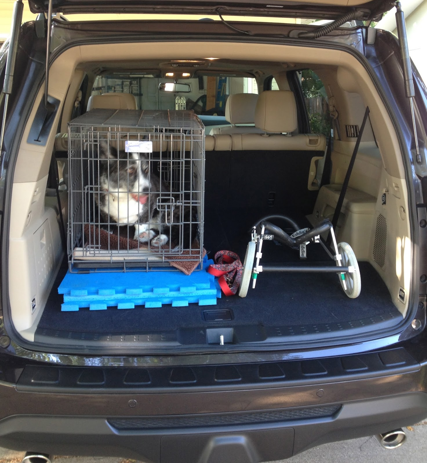 Honda Pilot Gas Mileage >> wags n woofs: New Wheels for Me (or Dog Crates in a Honda ...