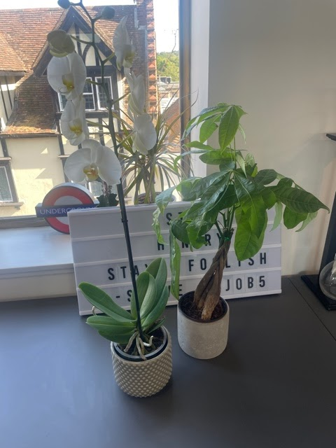 green plants in an office for a more eco friendly environment
