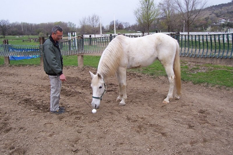 +R Training: Using Positive Reinforcement to Train Your Horse