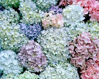 escenas-belleza-natural-mujeres-paisajes-flores