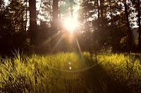 Sun Rays - Photo by Micah Hallahan on Unsplash
