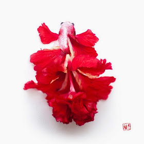 10-Lim-Zhi-Wei-Limzy-Paintings-using-Flower-Petals-www-designstack-co