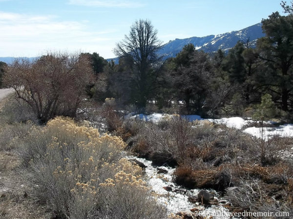 With patches of snow still on its forested banks, tiny Lehman Creek winds its way northeast through Great Basin National Park, downhill toward Baker, Nevada.