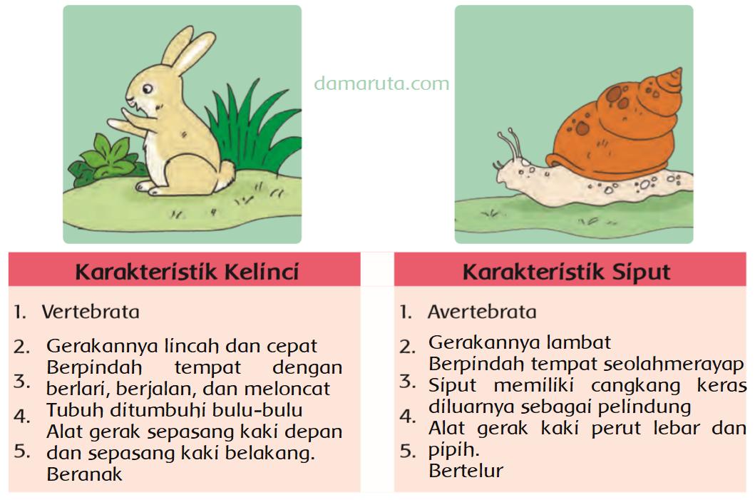 Hewan Vertebrata Dan Avertebrata Kelinci Dan Siput Halaman 42 Heart Id