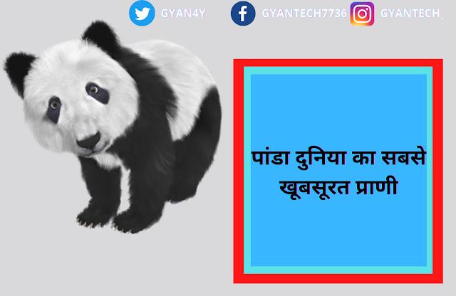 22 रोचक जानकारी पांडा के विषय में  । PANDA IN HINDI