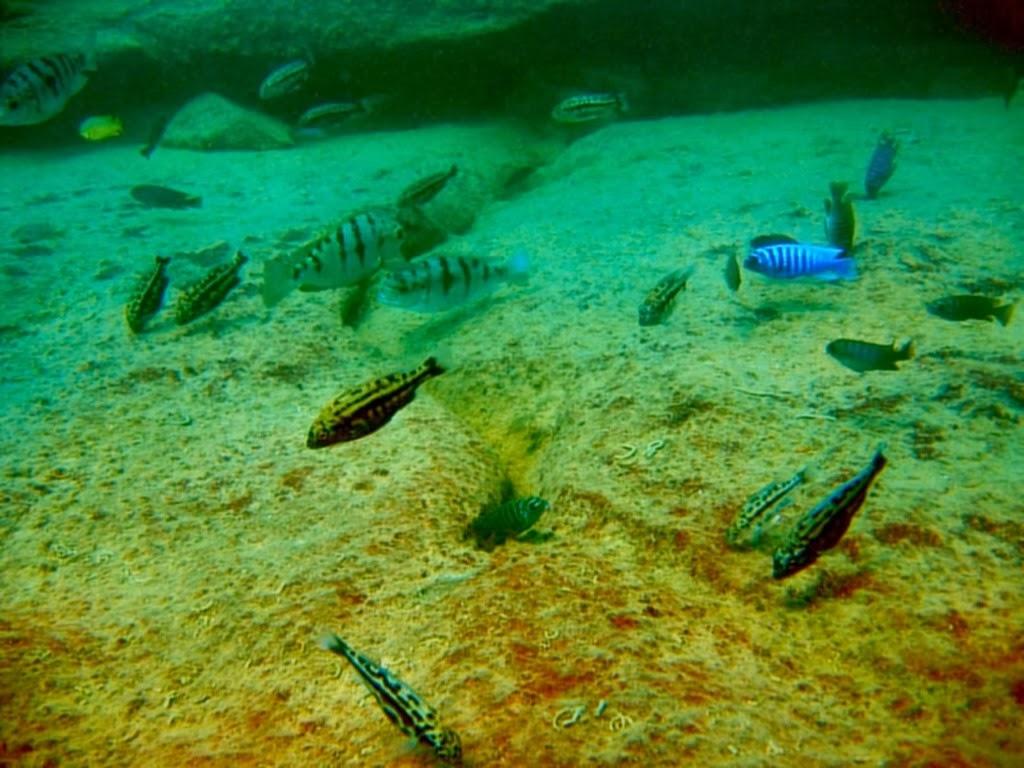 Malawi Gölü Belgeseli Türkçe
