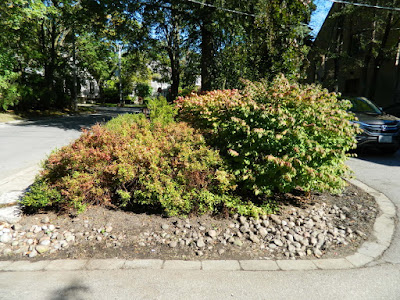 Forest Hill front yard fall clean up after by Paul Jung Gardening Services