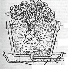 Gambar Hidroponik dengan menggunakan pasir