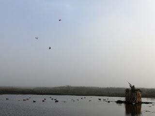 duck hunting in uruguay