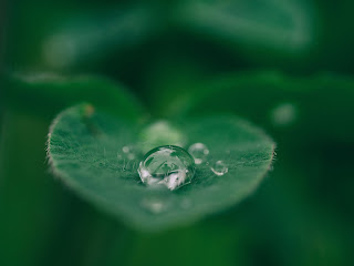 A closeup of a water droplet on a green leaf.