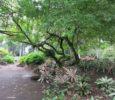Path, Foster Botanical Garden, Honolulu