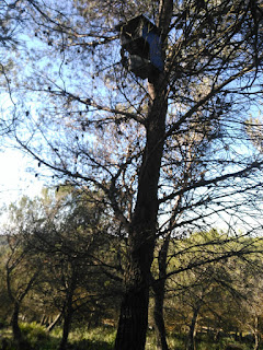 Caja nido Cárabo