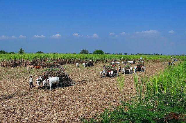 समृद्ध भारत के किसानों को सशक्त बनाना