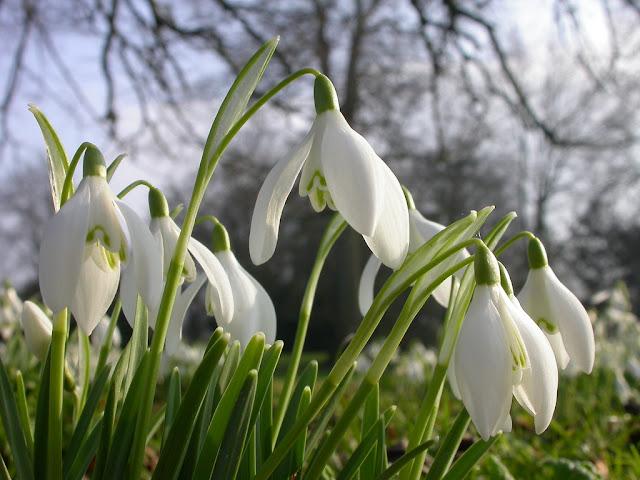 UK wildlife calendar reshuffled by climate change