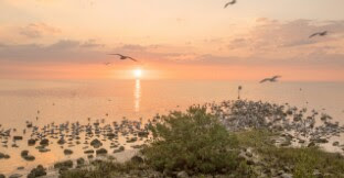 Travelling Ke Pulau Burung Dan Pulau Sangiang Provinsi Banten