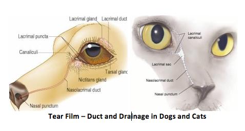 Ottawa Valley Dog Whisperer : Natural, Herbal Treatment for