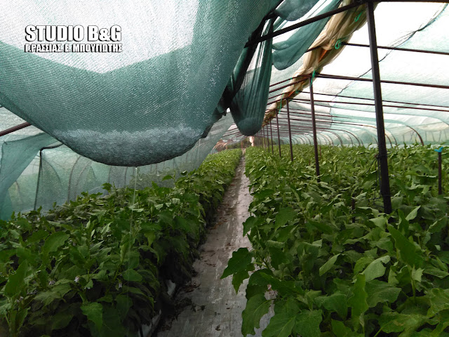 Τεράστια η καταστροφή σε καλλιέργειες και θερμοκήπια από την σφοδρή χαλαζόπτωση στην Αργολίδα