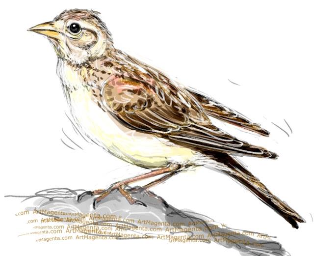 Short-toed lark sketch painting. Bird art drawing by illustrator Artmagenta