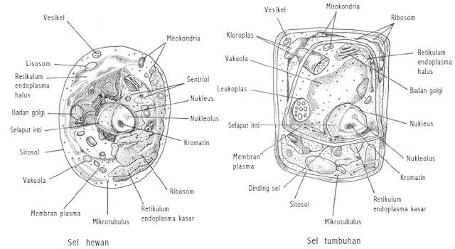 gambar sel hewan dan tumbuhan