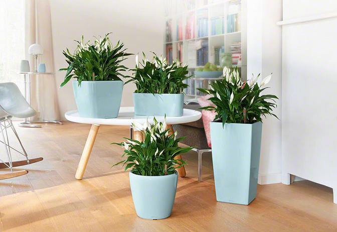 Fleur Hong Kong Florist 花香港Fleur hk 部落格: All about House plants