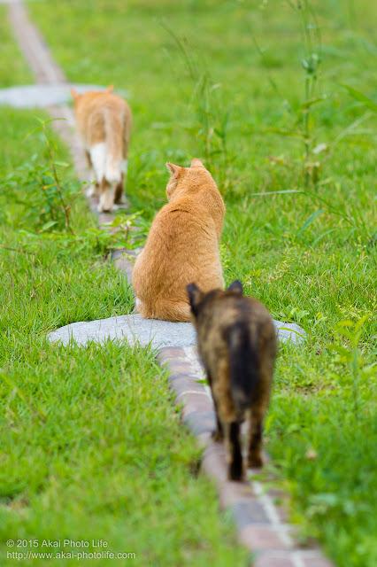 3匹の野良猫が歩いている写真