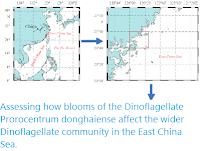 https://sciencythoughts.blogspot.com/2020/05/assessing-how-blooms-of-dinoflagellate.html