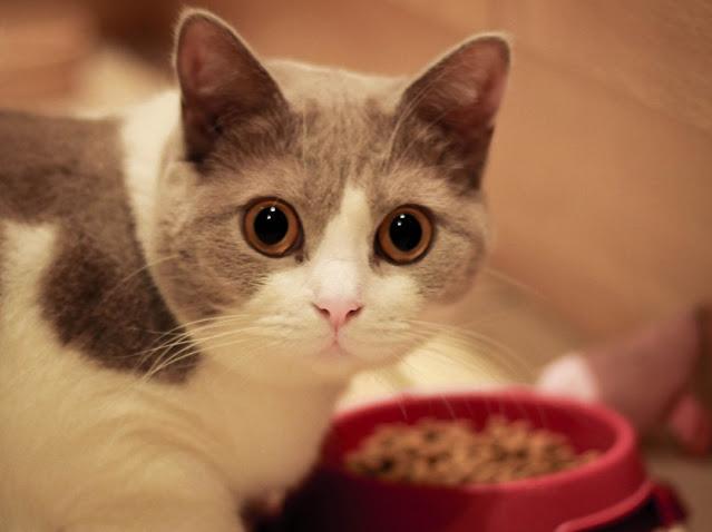 foto kucing imut dan menggemaskan