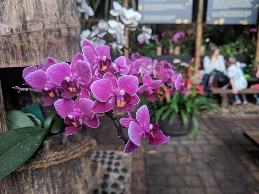 10 Reasons to Visit the Eden Project in Winter  - orchid garden