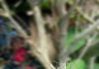 Corpo é encontrado por pescadores as margens de rio na Paraíba