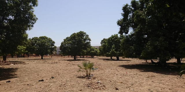 CHAD: Shakal plants 3,000 trees in Bahr El Ghazal to counter the advancing desert