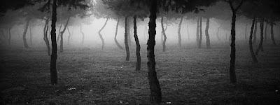 Ngôi sao bên rừng & Đêm trôi khúc vô thường-