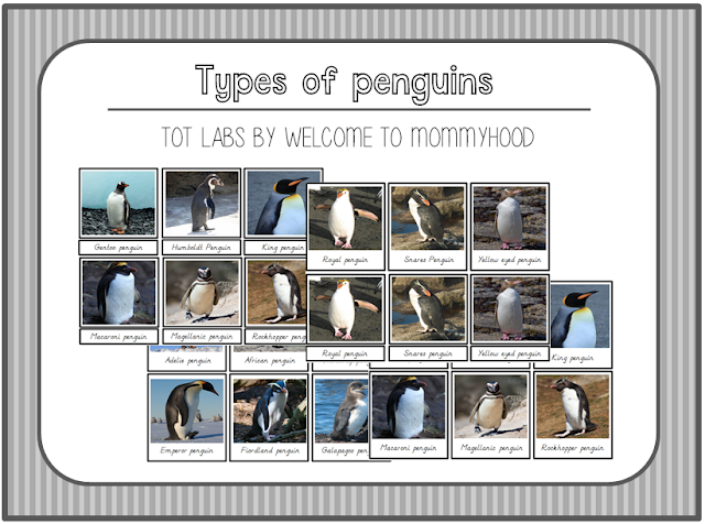 FREE Montessori types of penguins 3 part cards by Welcome to Mommyhood #freeprintables, #winteractivities, #montessoriactivities, #montessori