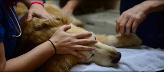 Έκαναν ευθανασία σε υγιή σκύλο για να ταφεί μαζί με την ιδιοκτήτρια - Ήταν η τελευταία της επιθυμία