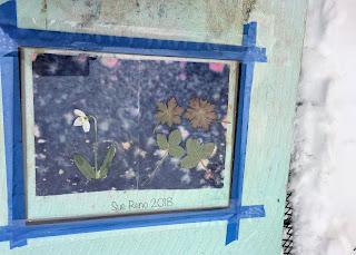 Wet cyanotype_Sue Reno_Image 277