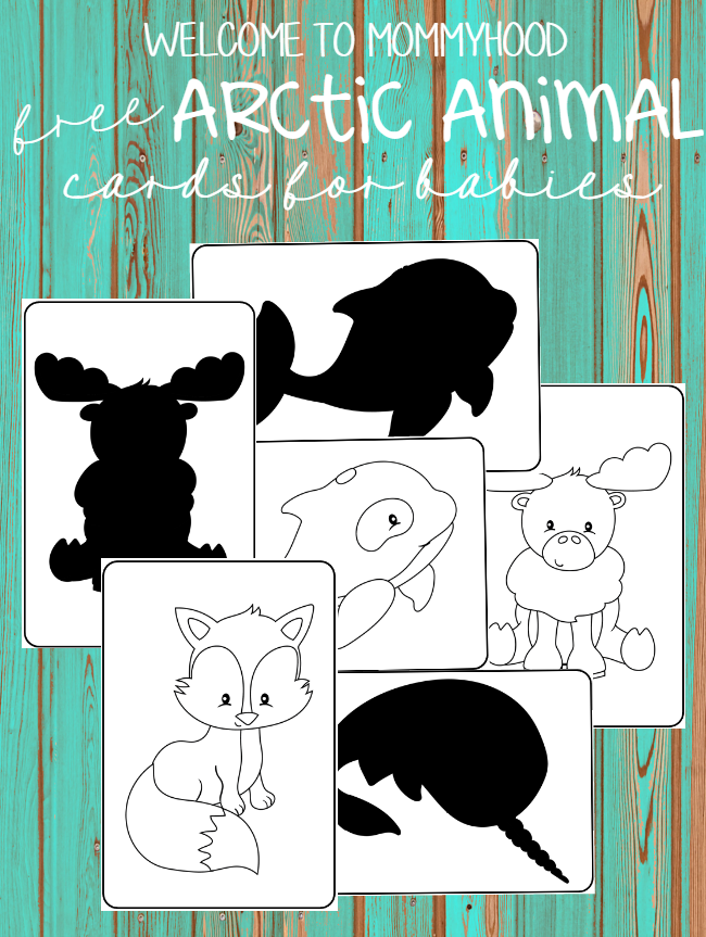Free black and white arctic animal image cards for babies and toddlers by Welcome to Mommyhood #montessori, #toddleractivities, #infantactivities, #montessoribaby