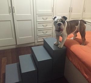 escadas para cães buldogue