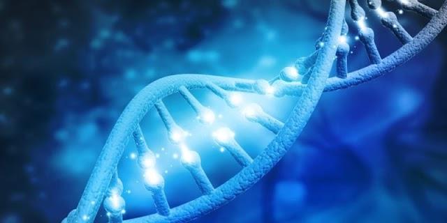 هيكل الحمض النووي