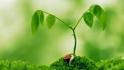 Faktor yang Memperngaruhi Pertumbuhan dan Perkembangan